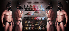 Puppy Collection @ Fetish Fair (Fawny & Mossu | IM : akirakiyoi) Tags: puppy bdsm mossu fetish kinky