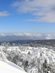 Troodos Mountains (157) (Polis Poliviou) Tags: snow nationalpark troodosmountains cypruscountryside clouds cloudy 2018 countryside freezing cyprus lovenature love naturepictures naturepics forest rural mount mountain mountains pinewood cold frost winter pinetrees pinetree mediterranean forestpark nationalforestpark olympus peak frozen morning environment nature ice snowtrees snowtree sports island cyprustheallyearroundisland cyprusinyourheart yearroundisland zypern republicofcyprus κύπροσ ©polispoliviou2018 polispoliviou polis poliviou πολυσ πολυβιου lovecyprus ski skateboard skiing skiers wood green earth canon