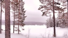 An open view to get an open mind, tranquility come into my heart. (evakongshavn) Tags: landscape paysage landschaft pastel love natur nature trees tree forest wald foret pink snow winter winterwald winterlandscape hivernal hiver
