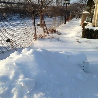 Down my garden path