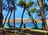 Trees with a view VIII (elphweb) Tags: hdr highdynamicrange sea ocean lake waterway seaside tree trees forest bush woods wood water