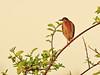 Green Heron 01-20180226 (Kenneth Cole Schneider) Tags: florida miramar westmiramarwca