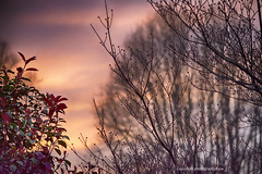 Colorful Sunset against Foliage (Photographybyjw) Tags: colorful sunset against foliage heavy rains finally blew through leaving clouds lower temperatures this scenic photograph north carolina photographybyjw rural country trees usa