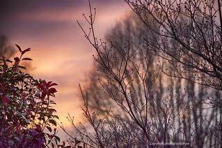 Colorful Sunset against Foliage