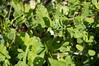Ψίνθος (Psinthos.Net) Tags: ψίνθοσ psinthos ιανουάριοσ γενάρησ january winter χειμώνασ φύση εξοχή nature countryside afternoon απόγευμα απόγευμαχειμώνα χειμωνιάτικοαπόγευμα λουλούδια άγριαλουλούδια αγριολούλουδα wildflowers yellowflowers κίτριναλουλούδια χόρτα greens field χωράφι ηλιόλουστημέρα sunnyday