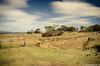 Spiky Bridge (Sven Wildschut) Tags: stone muur bridge east australia fotografie convicts sven landscape historical bestel omgeving order wall photo svenaandemuur spicky beach tasmania sticky wildschut coast