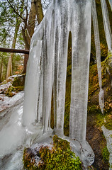 Clearly Cold (tquist24) Tags: connecticut endersstateforest hdr nikon nikond5300 outdoor cold frozen geotagged ice icicles moss nature tree trees winter granby unitedstates