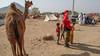 Secret drummer (Tim Brown's Pictures) Tags: india rajasthan pushkar camelfair camelfestival camel children visitor desert