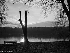 Unbenannt (weber.bert) Tags: köln grüngürtel analogefotografie blackwhite inbiancoenero noiretblanc grauwertabstufungen sw