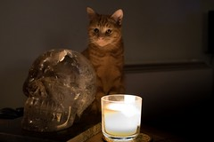 Spooky Cat (Evoljo) Tags: skull crystal candle flame ginger cat pussy eyes ears nikon d500
