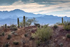 Distant Mountains (Kirk Lougheed) Tags: arizona carnegieagigantea pimacounty sonorandesert tucsonmountainpark usa unitedstates cactus desert landscape mountain outdoor paloverde plant ridge saguaro sonoran