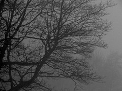 Seeking Clarity. March 2018 (SimonHX100v) Tags: fog mist weather tree nature morning march winter 2018 mother season trees woodland simonhx100v sony dschx100v hx100v cybershot winter2018 mothernature march2018 sonydschx100v sonyhx100v sonycybershotdschx100v nottingham nottinghamshire