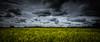Yellow (paullangton) Tags: yellow blue cloud canon farm countryside crop rapeseed rain weather