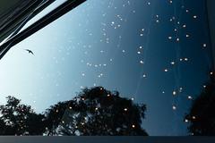 Barcelona / Spain 2017 (monoauge) Tags: 2017 barcelona fuji fujix70 fujifilm fujifilmx70 x70 spain spanien espana catalunya katalonien reflection street bird lights sky freedom trees streetshot streetphotography buscatoworkshop workshop streetphotographyworkshop window glassreflection fenster