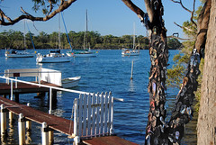 The thong tree at Dunbogan (cupitt1) Tags: tong flipflop tree waterside river dunbogan camden haven jetty wharfboats yacht