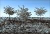 2013-08_DSC_5438_20171220NB2 (Réal Filion) Tags: québec canada nature végétale arbre environnement ciel bleu trois tree sky bleue three vegetable environment quebec