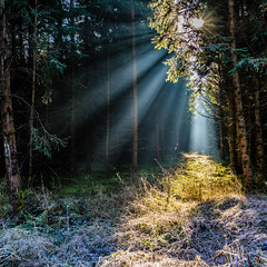 Winter Warmth (2) (*Capture the Moment*) Tags: 2016 forest licht lichtstrahlen light lightbeam rayoflight sonnenstrahlen sonya7m2 sonya7mii sonya7mark2 sonya7ii sonyfe2470mmf4zaoss sonyilce7m2 wald winter