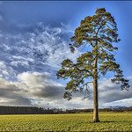 Lonesome Pine_G5A6666 thumbnail