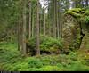 20170807_5 Mossy rocks in forest | The trail Bohusleden, section 11, between Hasteröd & Vassbovik | Bohuslän, Sweden (ratexla) Tags: ratexlasbohusledenhike bohusleden bohusledenetapp11 7aug2017 2017 canonpowershotsx50hs bohuslän nature sweden sverige scandinavia scandinavian europe landscape scenery scenic nordiccountries norden skandinavien beautiful earth tellus photophotospicturepicturesimageimagesfotofotonbildbilder hiking hike ontheroad journey vacation holiday semester resaresor sommar europaeuropean summer travel travelling traveling forest skog green moss mossa mossig sten favorite