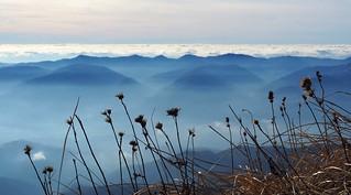 PC260369 fiori di montagna