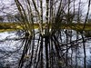 Pretty Wet! (boppin.mule) Tags: shadow contrast 荷兰 nederland netherlands 山水 rural countryside reflection scenery 木 trees tree sunset 冬季 water winter 风景 landscape