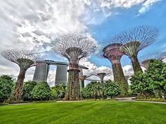 Super Grove (SGarriott) Tags: sgarriott scottgarriott olympus omd em5ii 714mmf28 landscape garden gardens gardensbythebay singapore lawn trees sculptures structures hotel city park vegetation lush