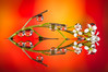 Drops & Flowers > gocce e riflessi by Mario Nicorelli con Nikon D300s macro fotografia (Mario jr Nicorelli ( Salgareda Treviso )) Tags: marionicorelli macrofotografia macro salgareda sandonàdipiave mottadilivenza motta d300s fotografico foto flowers fiori drops nikon nikond300s nicorelli
