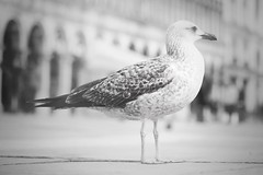 ...sw(str)eet... (*ines_maria) Tags: llne mood perspective dof peace monochrome alone bird crowed day famoues italy landmark one pedestran people scenic sea seagull stmarksquare standing sunny tourist famous travel venice venedig italien sight old city piazza square baroque beauty lovely europe culture history holiday italian marco museum romantic wonderfully bw panasonicdcgh5 dcgh5 dreamy