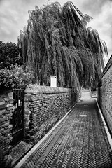 VENICE (Masssimiliano Maggi) Tags: approvato landscape tree street streetphoto photostreet italy venice bw maxmaggifecit image astoundingimage