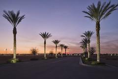 Illuminated Palms by GC_Dean - Gilbert, Arizona  5700, -02, -04