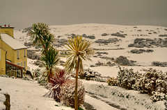 Palmtrees and snow. (alex.vangroningen) Tags: snow palmtrees colors white green red yellow greysky nikond7000 hills northwales house windows