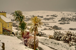 Palmtrees and snow.
