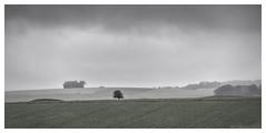 Tree 2 (MarkWaidson) Tags: stonehenge tree barrow grey raining