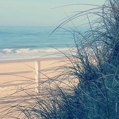 (Timsalabimm) Tags: northsea nordsee beach strand sylt sand natur nature ocean ozean water wasser dune dunes düne dünen wellen waves
