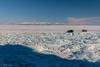 _W0A4213 (Evgeny Gorodetskiy) Tags: winter cape siberia landscape olkhon travel nature khoboy baikal hummocks island lake snow russia ice irkutskayaoblast ru