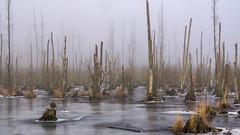 Friedhof der Bäume - Tree cementary (ralfkai41) Tags: tod nebel landschaft nature wasser wald natur bäume trees eis forest woods usedom landscape death woodlands water winter ice fog mist