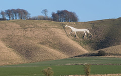 Cherhill White Horse, Wiltshire (baldychops) Tags: cherhill horse white whitehorse cherhillwhitehorse icon iconic hill hillside walk climb old history historic ancient outdoor winter cold chilly field grass trees visit