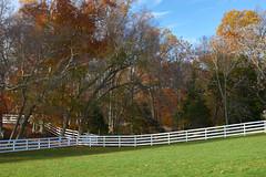 Largest field