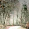 Las últimas (acativa) Tags: hojas invierno árboles trees camino galicia winter texturas textures ramas acativa naturaleza rural campo robles carballos hojassecas
