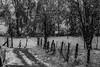 240A3993 (JoseFuko8) Tags: nieve fuentesauco zamora paisajes nevada invierno canon 7d mark ii pueblo campo