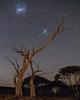 Namadgi Nightscape (nightscapades) Tags: act astronomy astrophotography australiancapitalterritory canberra eucalypt eucalyptus galacticcore gumtrees ianwilliams lmc largemagellaniccloud magellanicclouds milkyway namadginationalpark night nightscapes smc sky smallmagellaniccloud stars trees