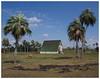 la finca (color version) (kurtwolf303) Tags: palmen palms building farm animals cows kühe sky clouds wolken finca olympusem5 omd microfourthirds micro43 systemcamera mirrorlesscamera mft kurtwolf303 cuba kuba karibik caribbean landscape landschaft unlimitedphotos 250v10f