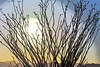 Desert sun (thomasgorman1) Tags: sun scenic desert nikon processed effects colorized enhanced landscape sunset sunlight ocotillo