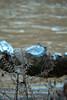 Jewelry (clarue79) Tags: floraandfauna water logs winter nature ice