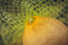 Citrus (simonpe86) Tags: small citrus macro macromondays yellow makro fruit monday detail