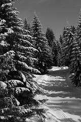 Passage en foret (David Bertholle) Tags: foret forest sapin neige snow paysage landscape noir et blanc blackwhite noiretblanc nikon d7200