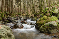 Ninglinspo. (gillesfrancotte) Tags: 2018 amblève ardennes autumn aywaille d800 january janvier nikon ninglinspo outdoor sedoz automne cascade creek eau fall forest landscape longexposure nature stream torrent undergrowth underwood water waterfall waterscape wood wallonie belgique be rock stone
