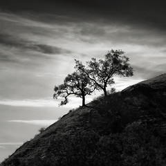 A Pair of Trees along the Sierra Vista Trail (StefanB) Tags: 45200mm california em5 geotag hiking outdoor sierravista tree treescape 2017 clouds pair