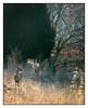 Early Morning Deer (GAPHIKER) Tags: wildlife deer cold breath yard