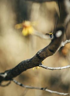 winter honey bee